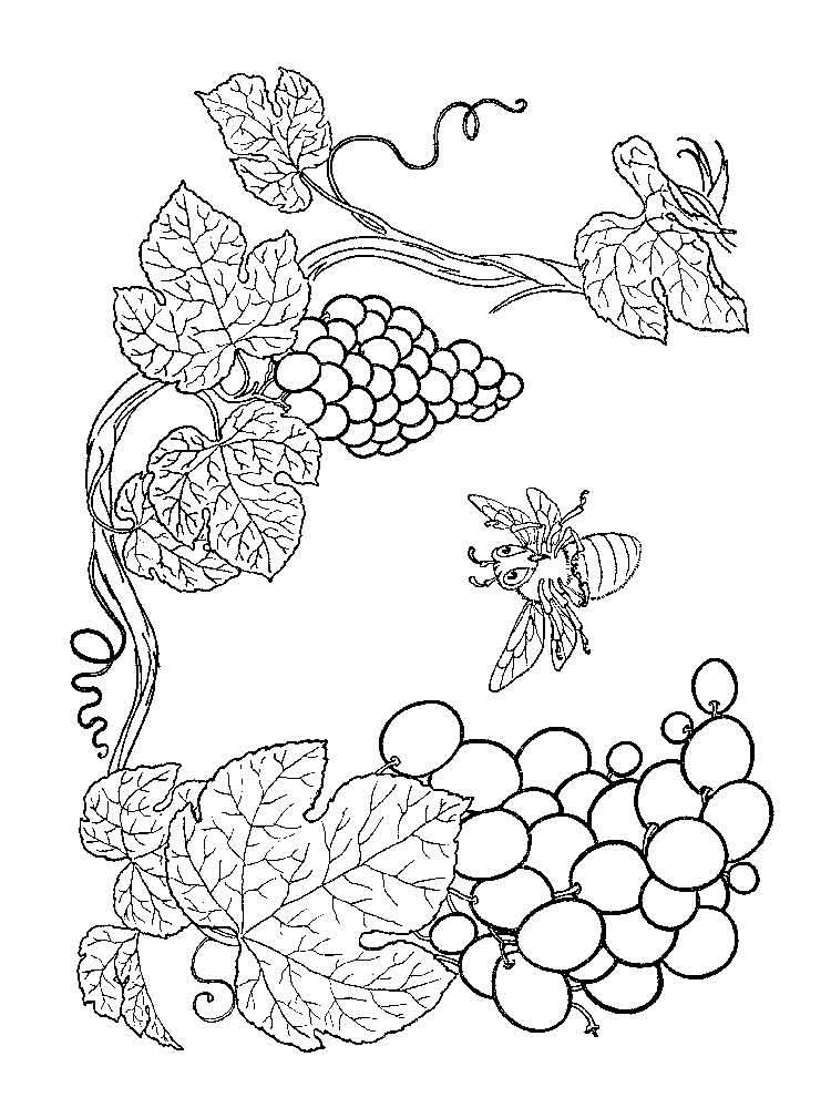raskraska-vinograd-11
