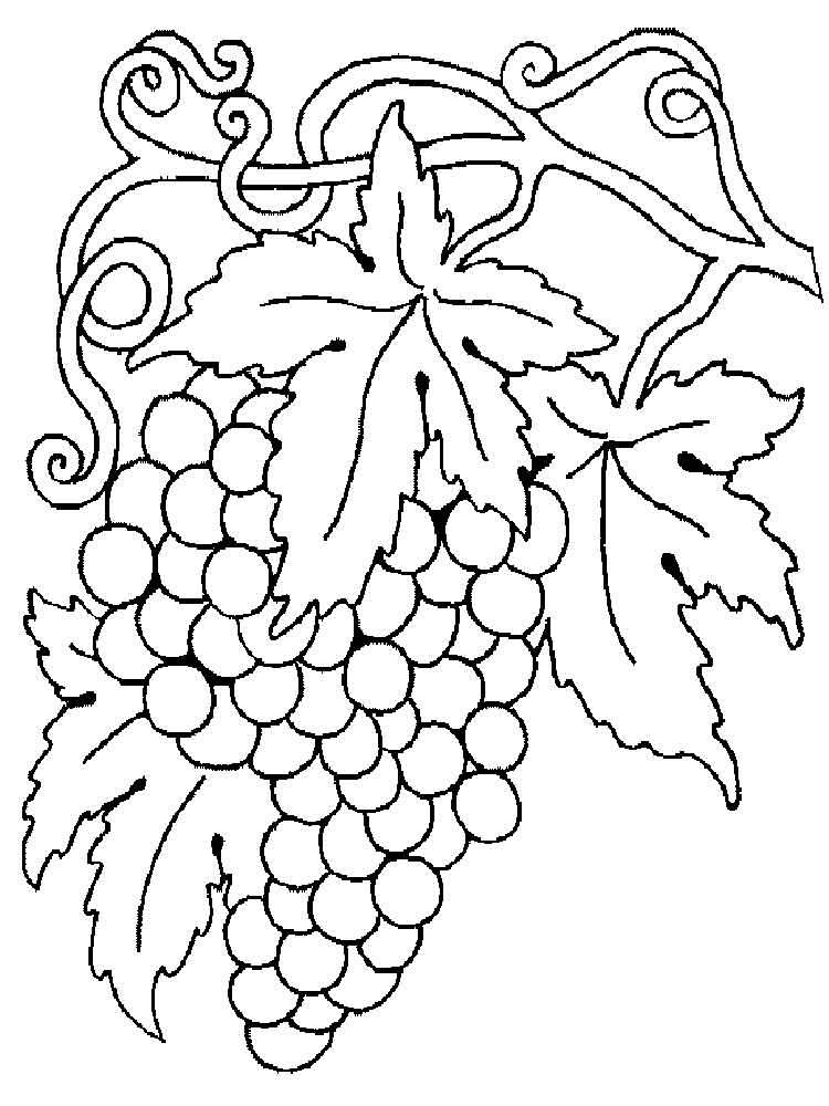 raskraska-vinograd-12
