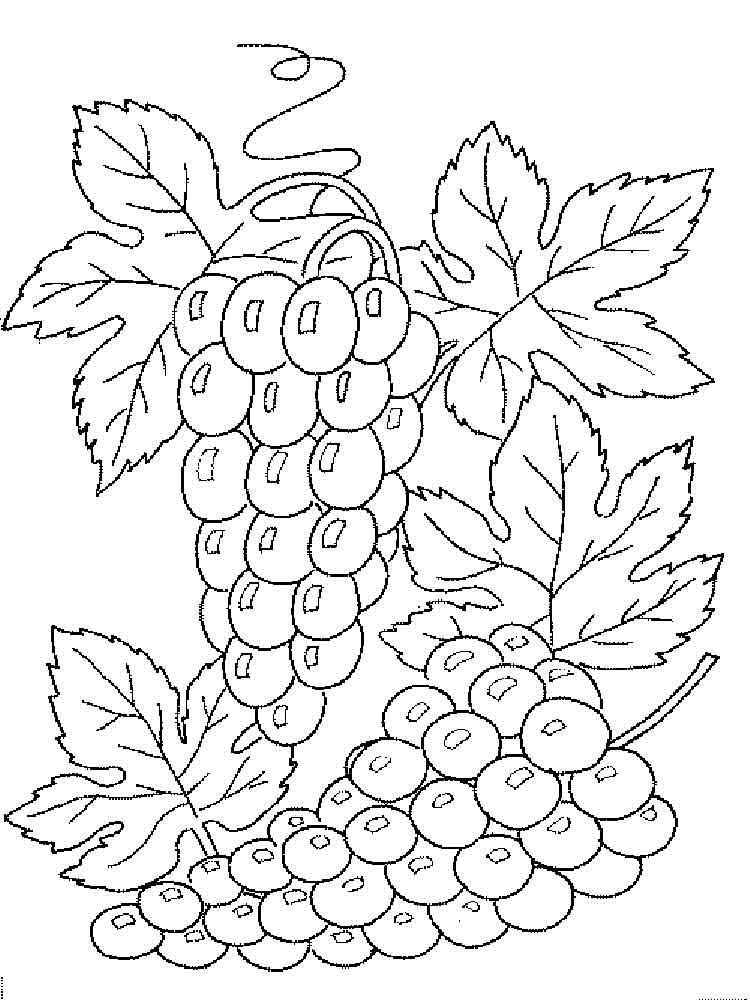raskraska-vinograd-13