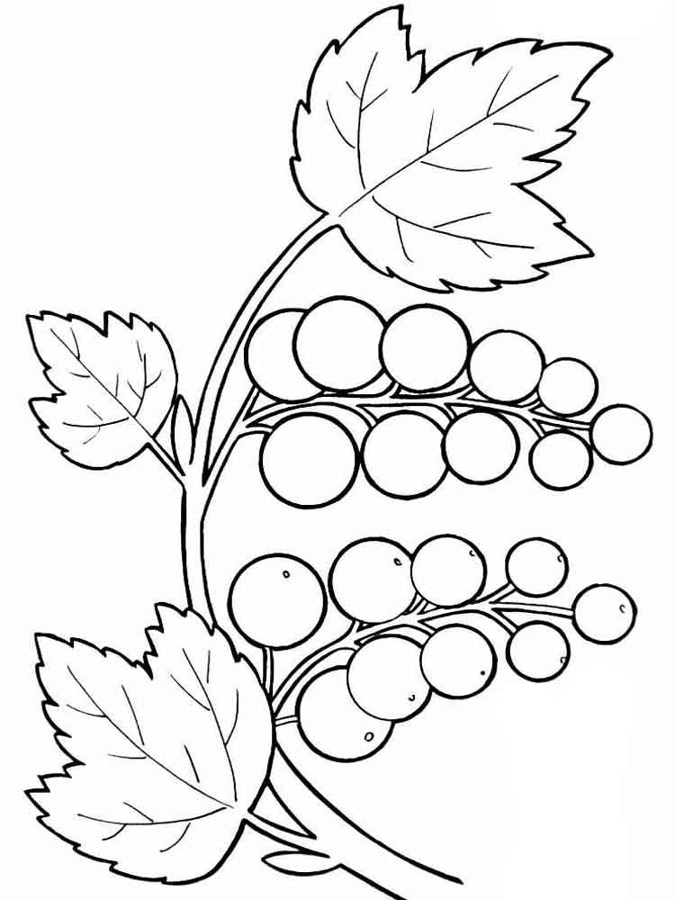 raskraska-vinograd-16