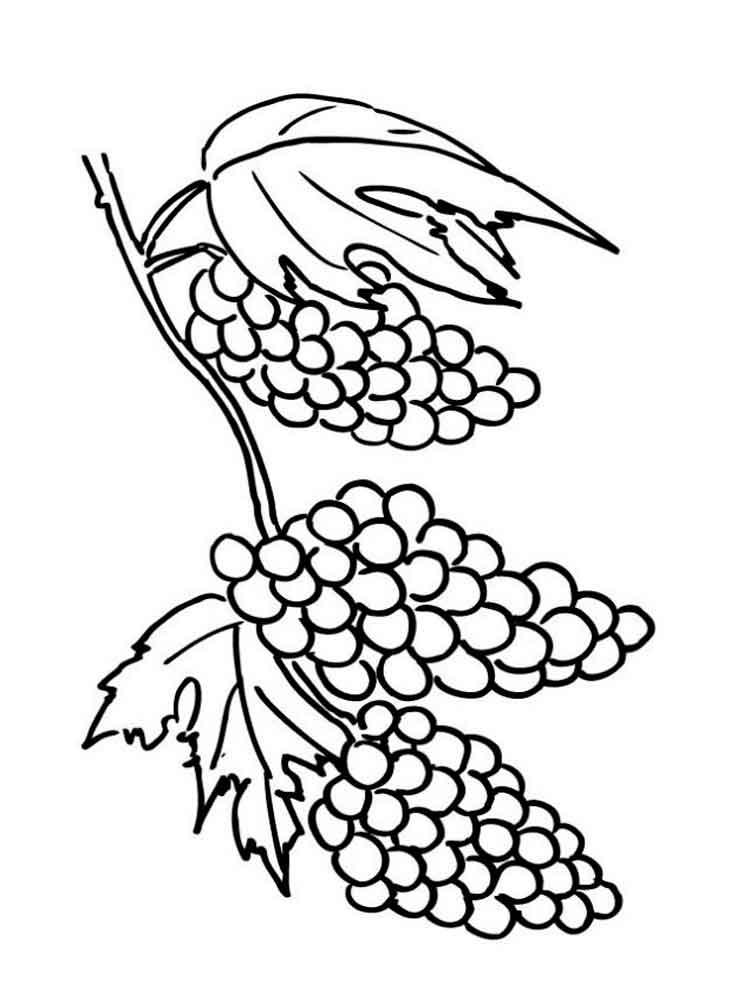 raskraska-vinograd-2