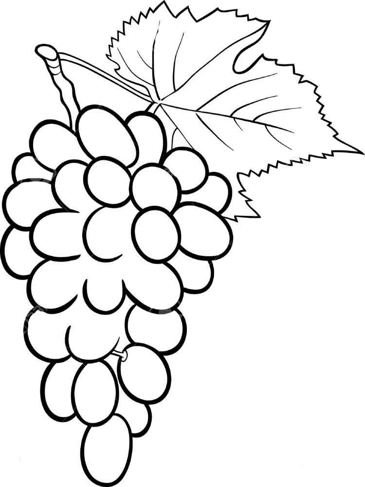 raskraska-vinograd-3