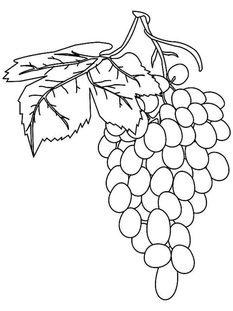 raskraska-vinograd-4