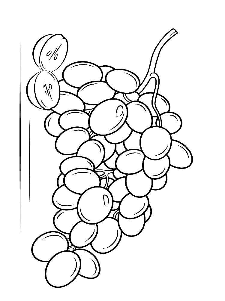 raskraska-vinograd-7