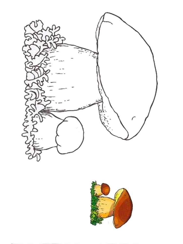 raskraski-belyi-grib-4