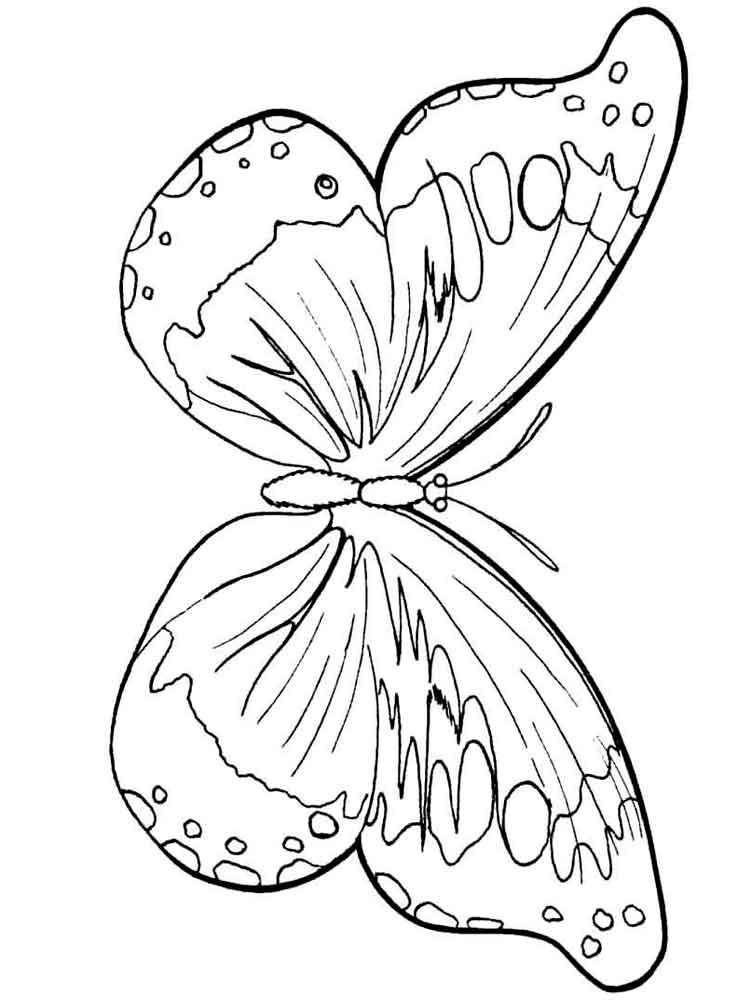 Раскраска картинки бабочек для детей детского сада