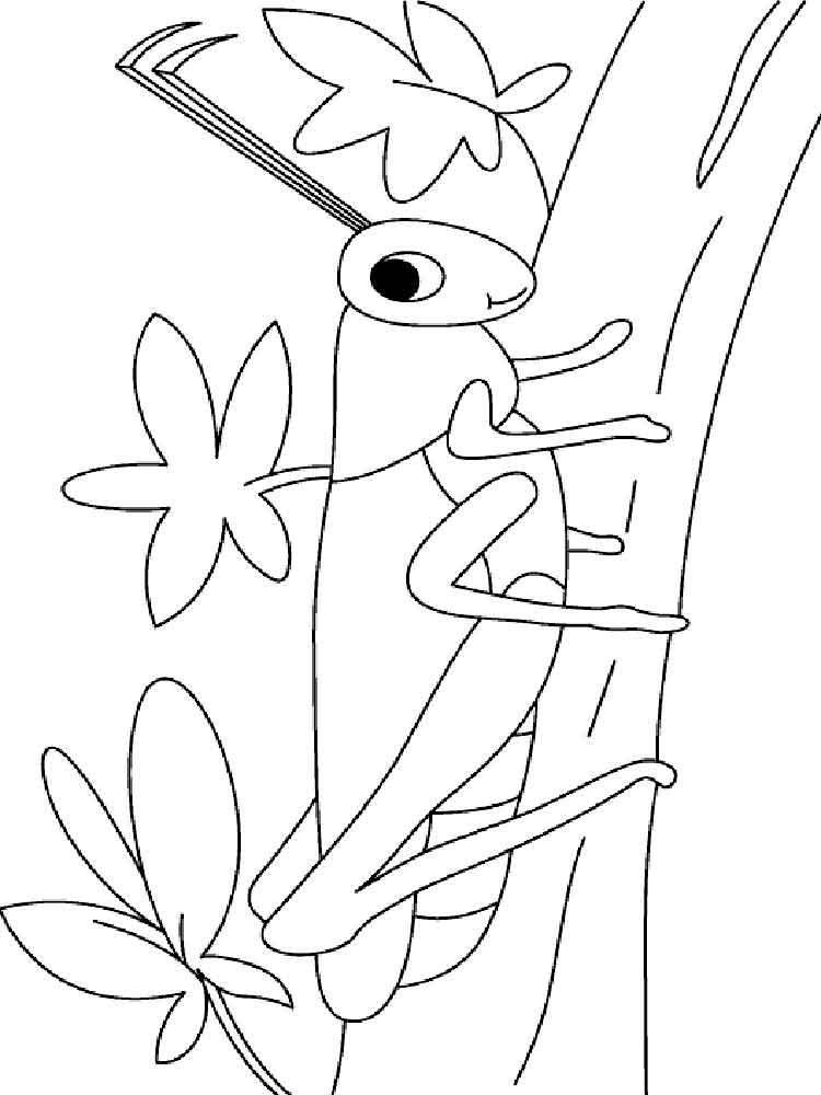 Кузнечик картинки детские раскраски