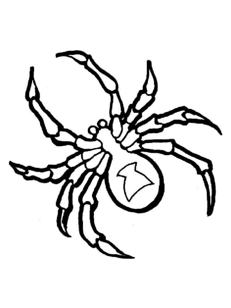 raskraski-pauk-16
