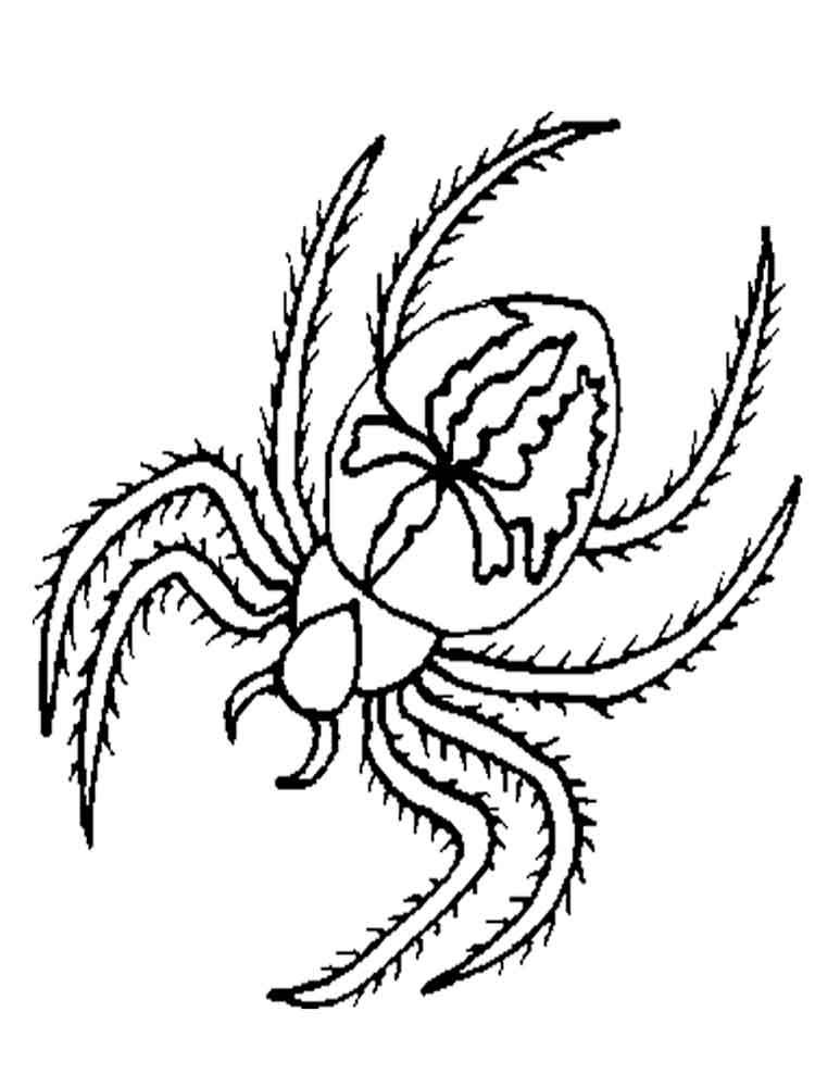 raskraski-pauk-18