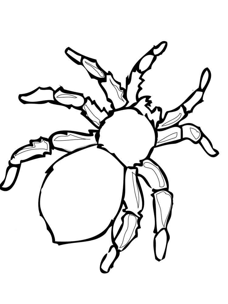 raskraski-pauk-3