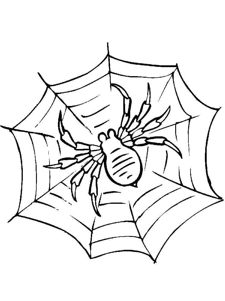 raskraski-pauk-8