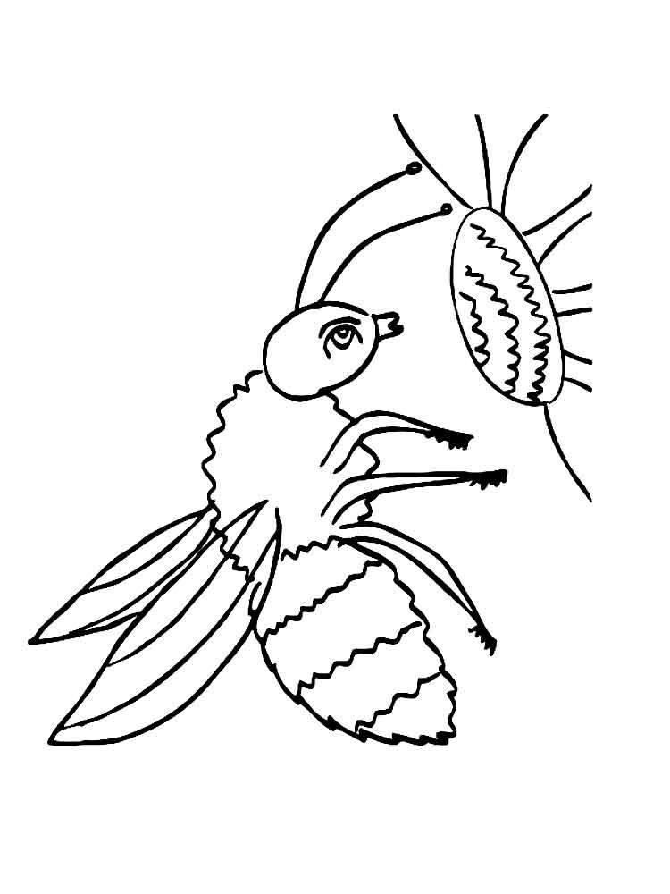 Шмель рисунок для детей карандашом срисовать