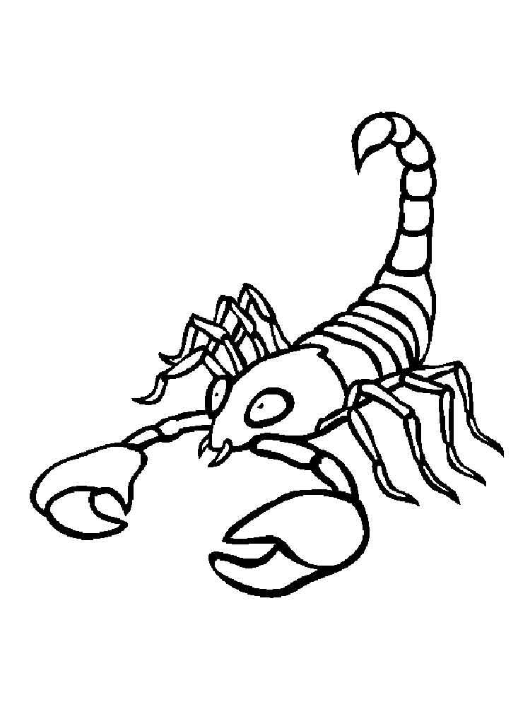raskraski-skorpion-10