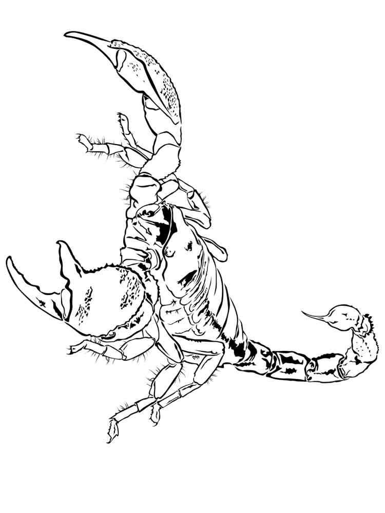 raskraski-skorpion-6