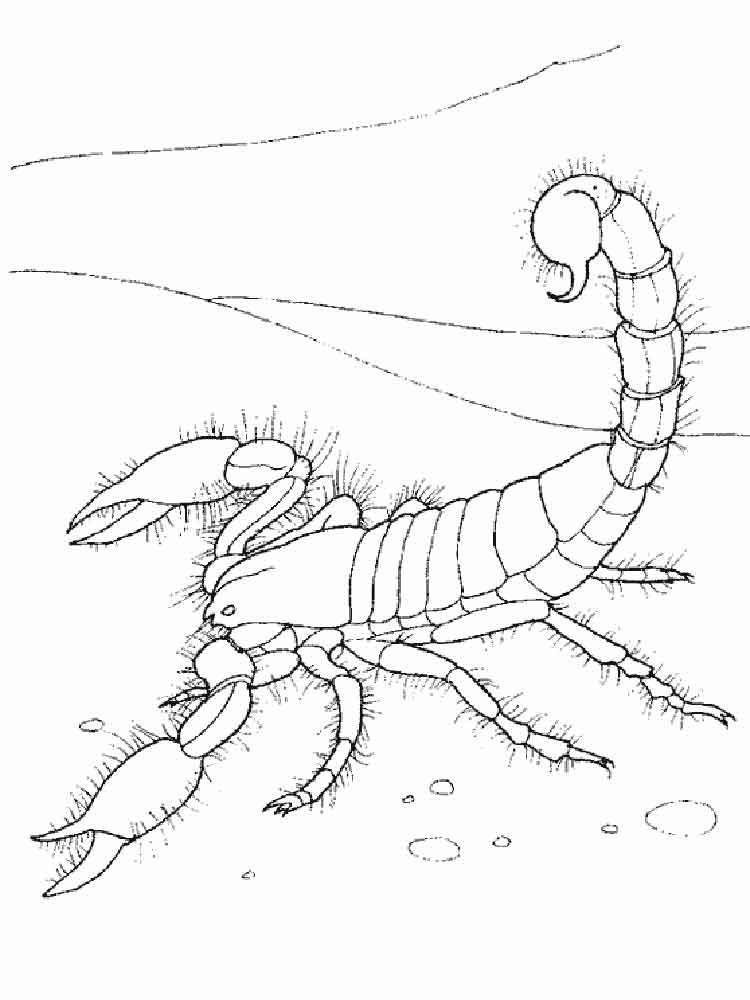 raskraski-skorpion-8