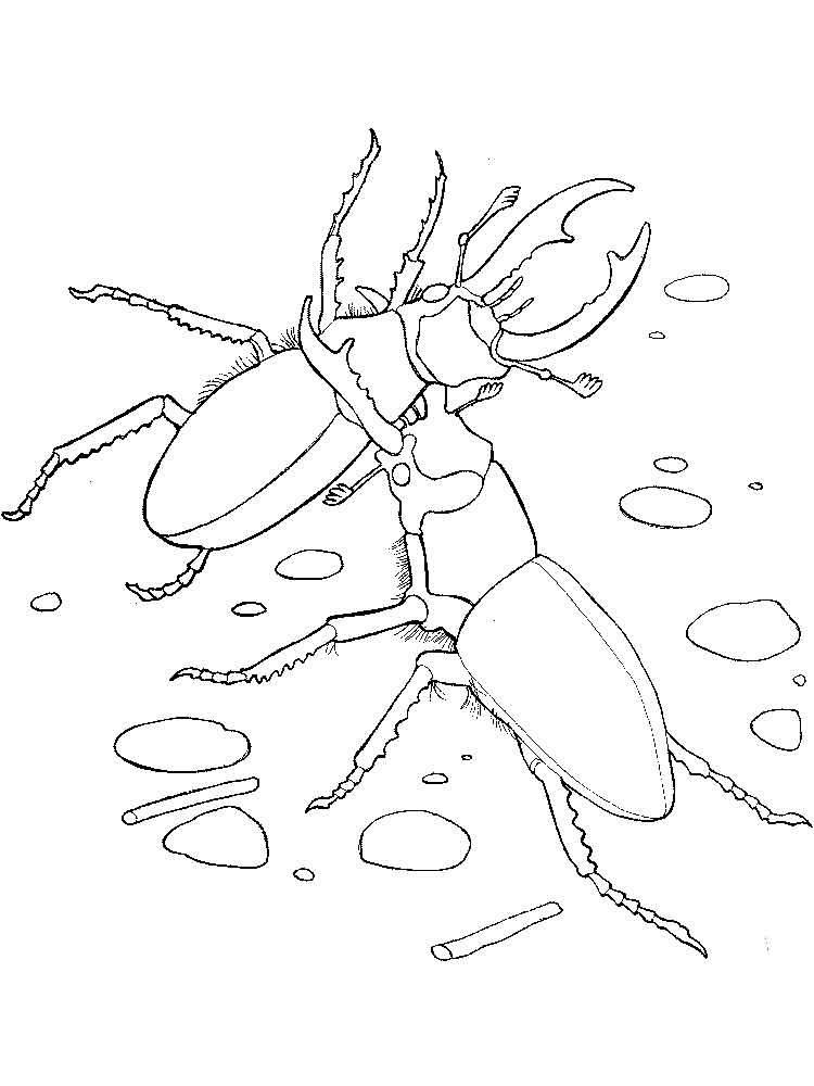 раскраска жук носорог распечатать объем
