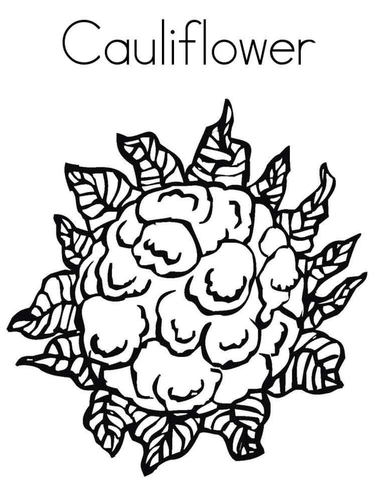 raskraska-cvetnaja-kapusta-3