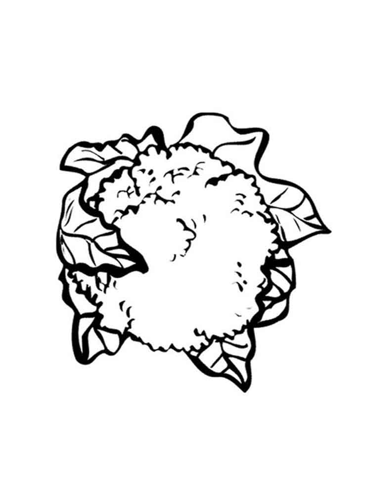 raskraska-cvetnaja-kapusta-4