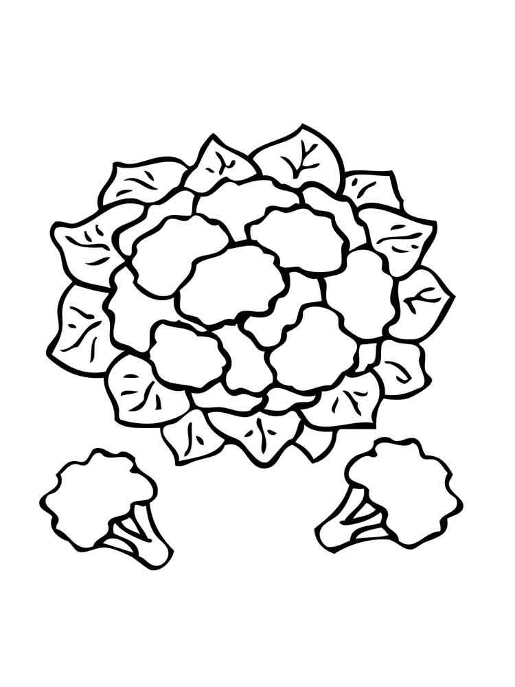 raskraska-cvetnaja-kapusta-5