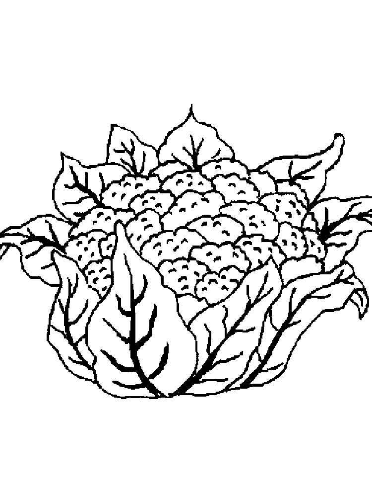 raskraska-cvetnaja-kapusta-8