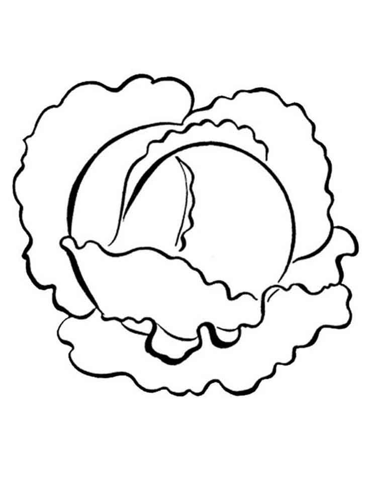 raskraska-kapusta-9