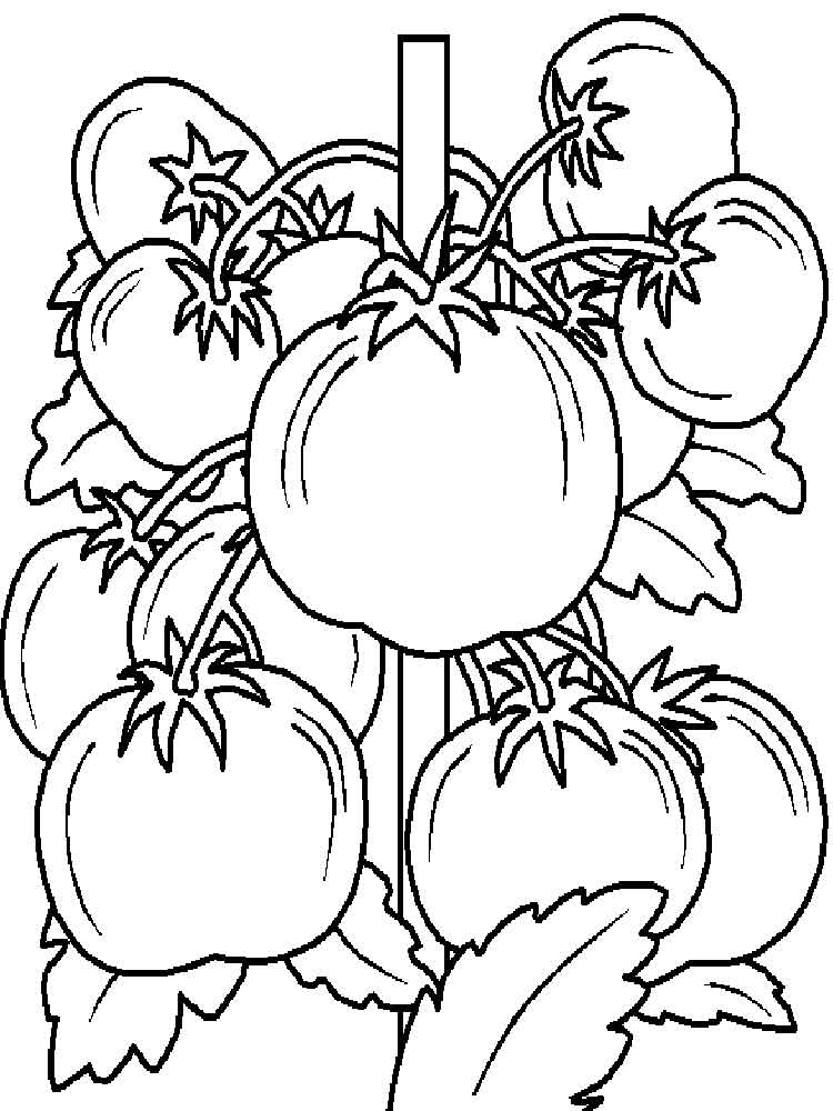 raskraska-pomidor-13