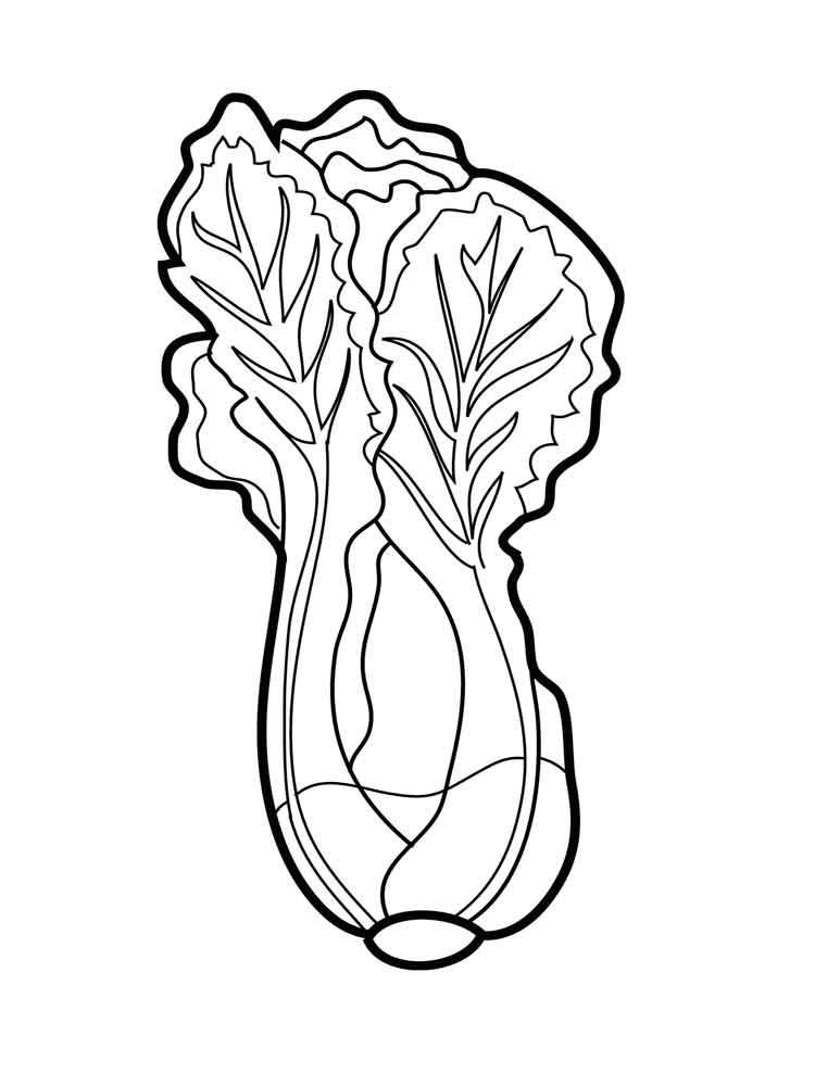 raskraska-salat-1