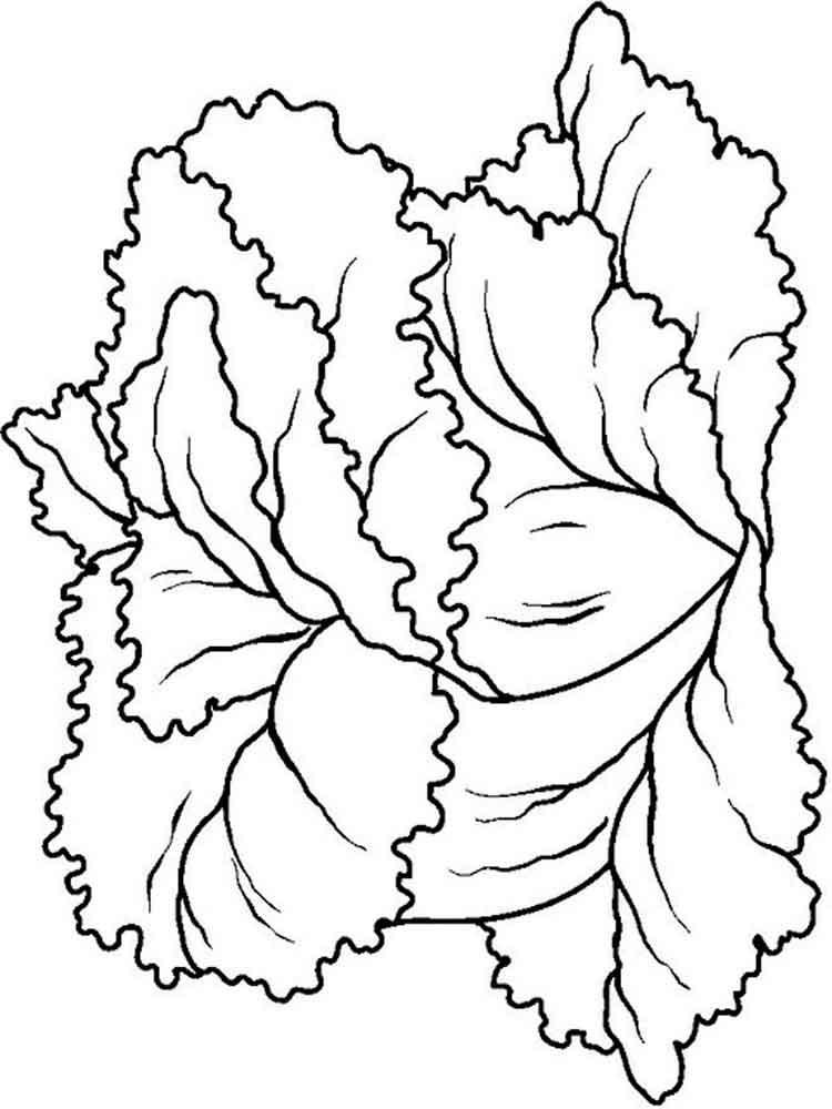 raskraska-salat-2