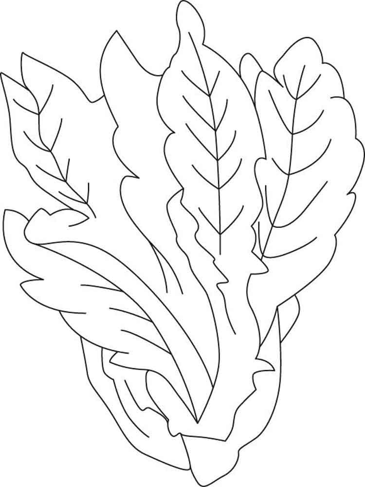 raskraska-salat-5