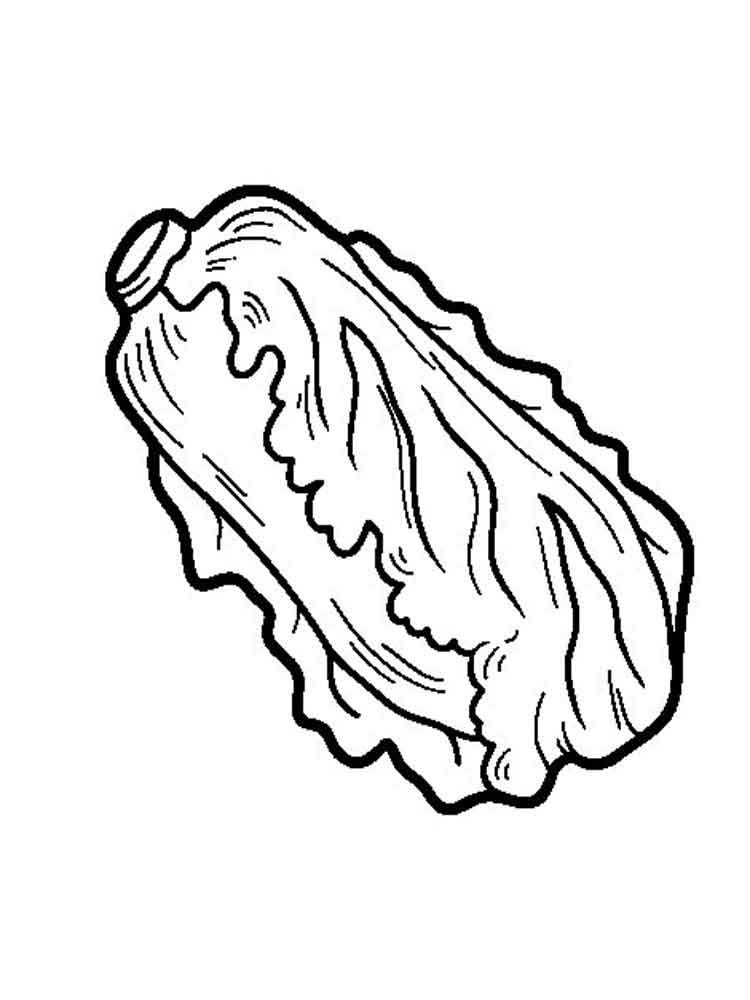 raskraska-salat-6