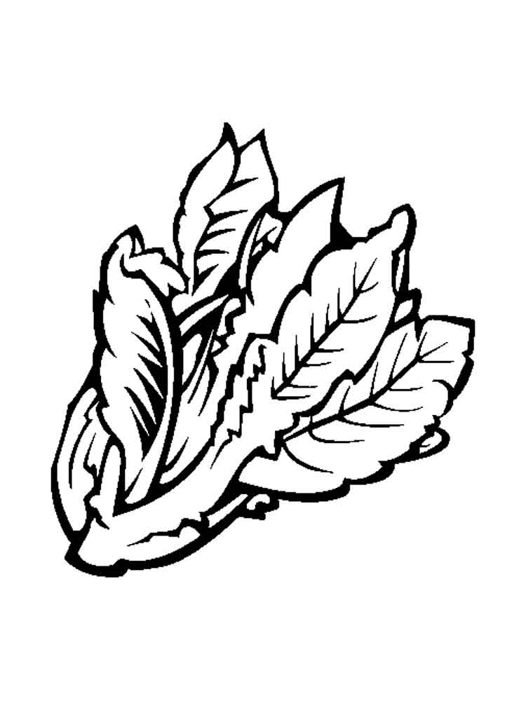raskraska-salat-9