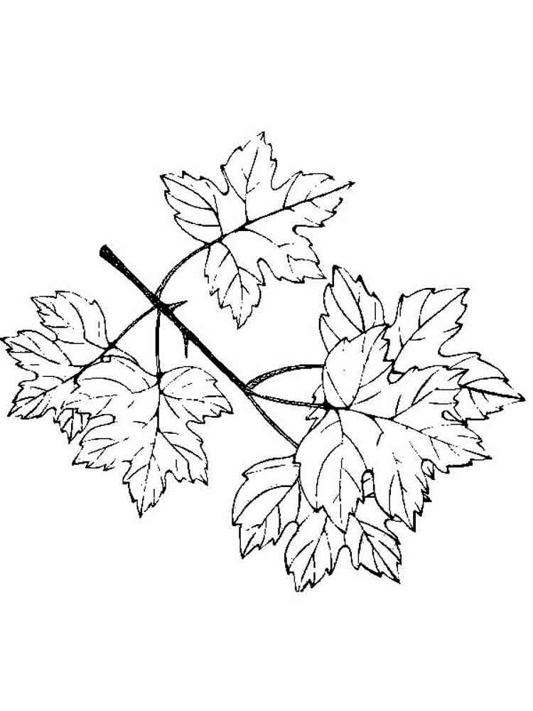 raskraski-listya-16