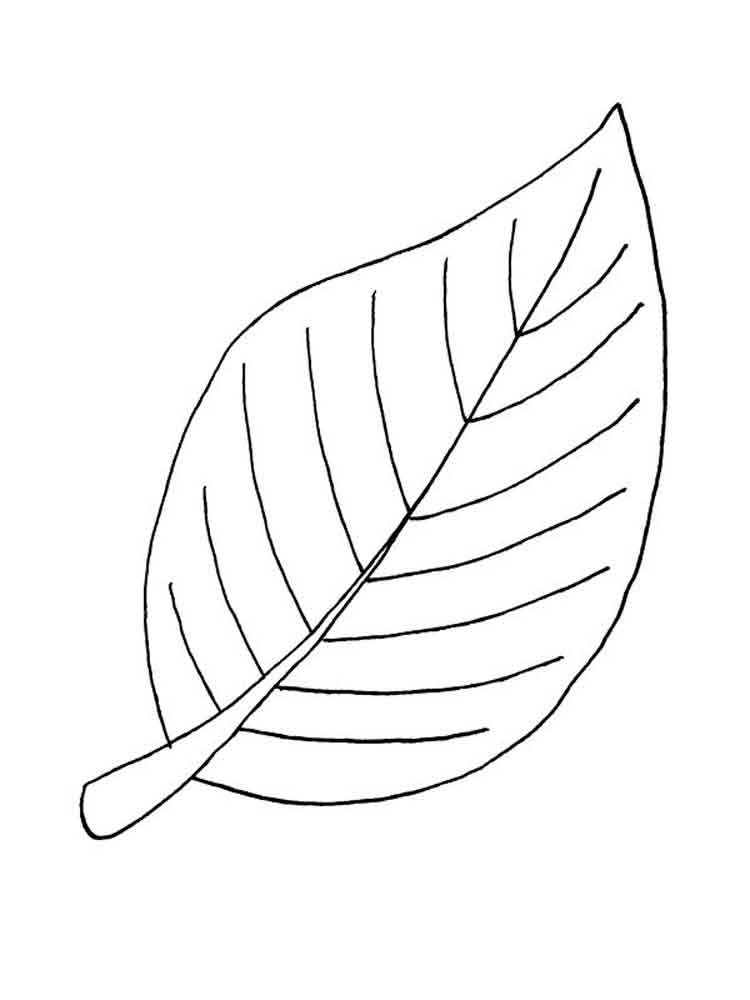 Осенние листочки раскраска для детей распечатать