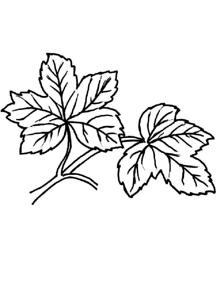 raskraski-listya-6