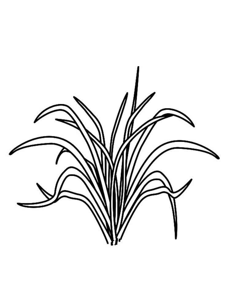 raskraski-trava-14