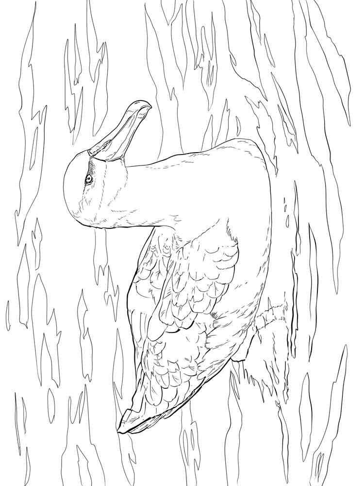 raskraski-albatros-10