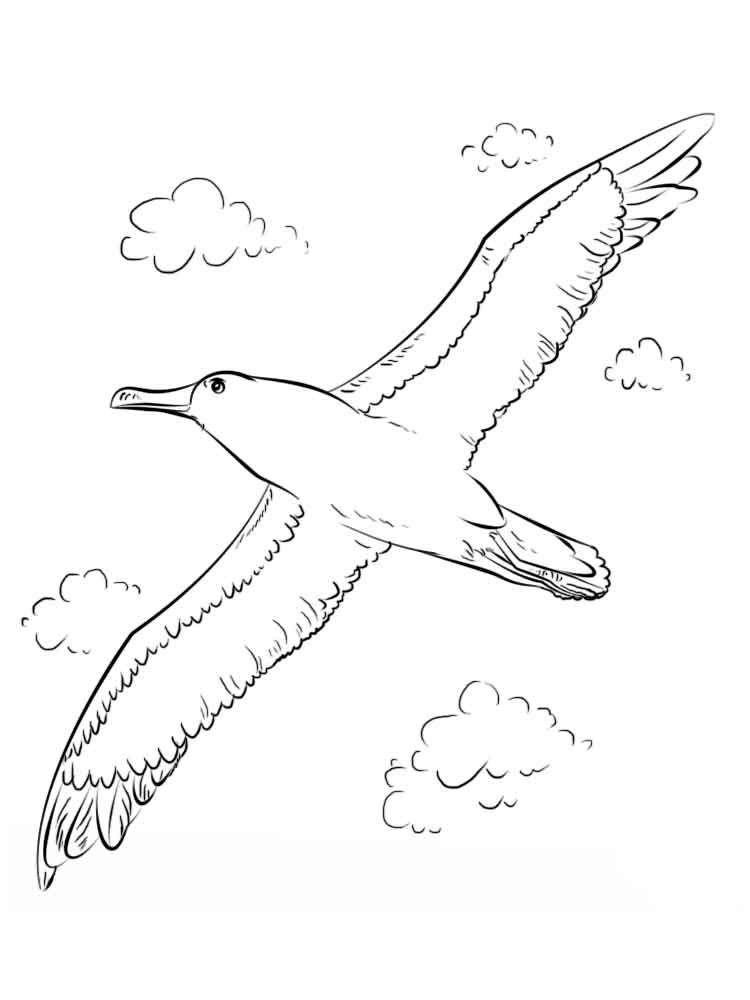 raskraski-albatros-11