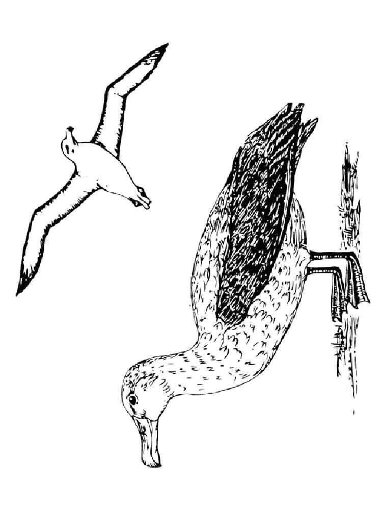 raskraski-albatros-12