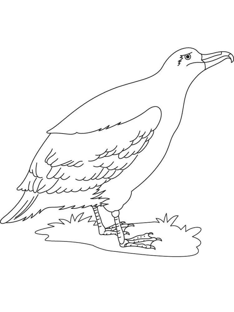 raskraski-albatros-2