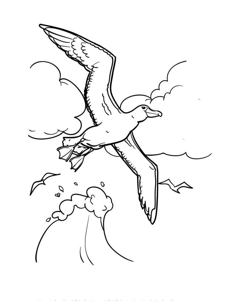 raskraski-albatros-4