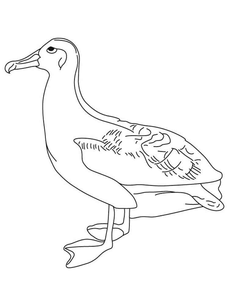 raskraski-albatros-5
