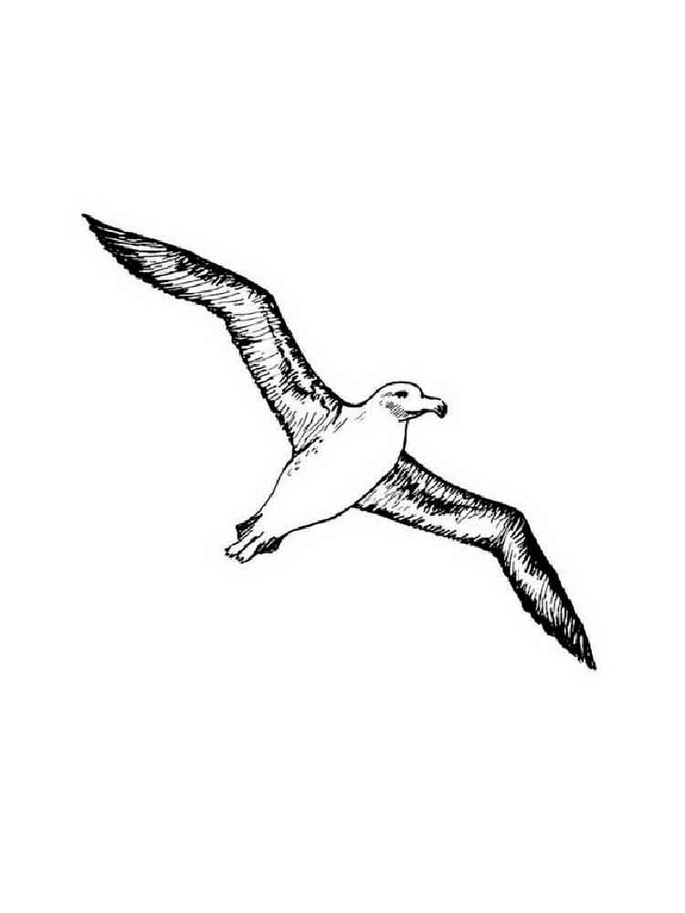 raskraski-albatros-6