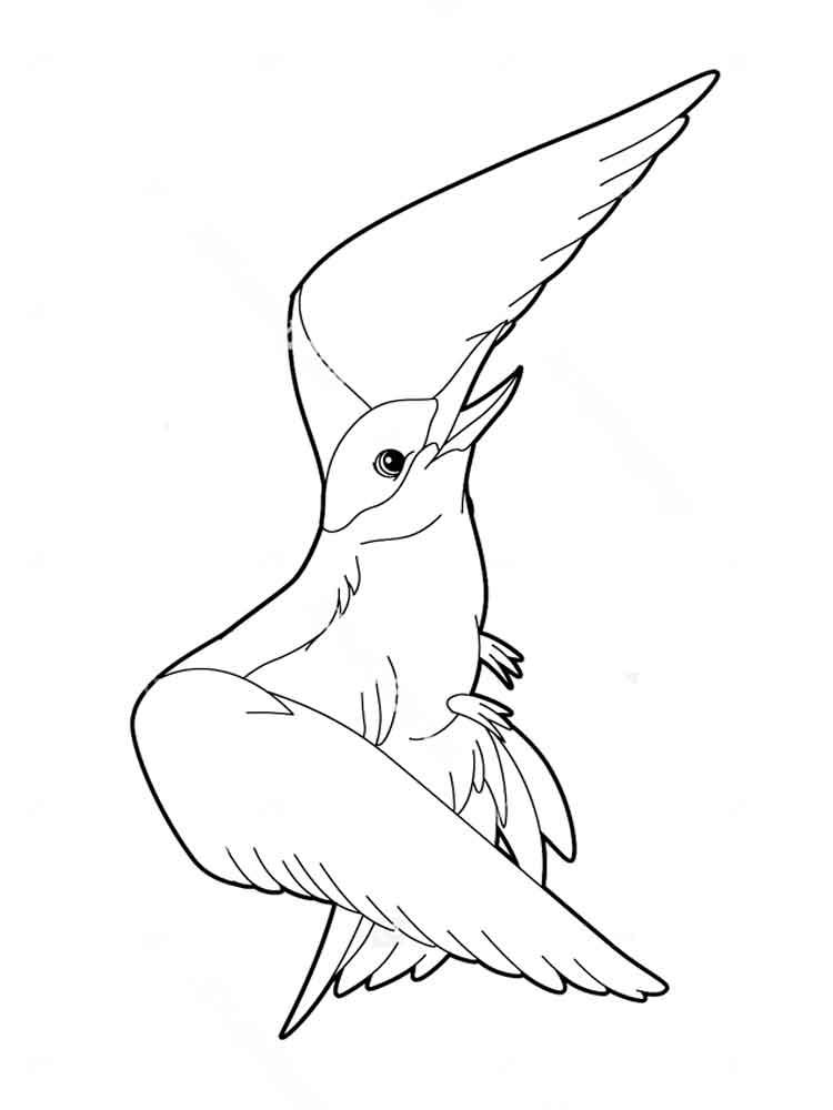 raskraski-albatros-7