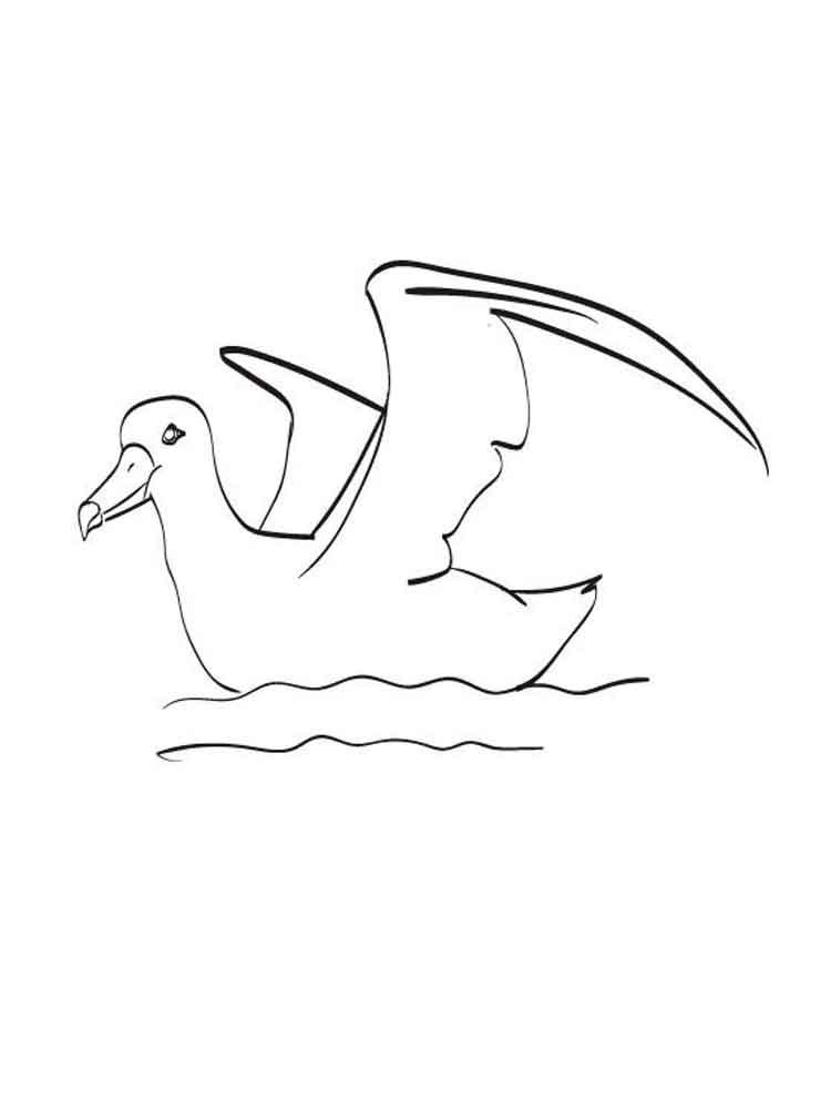 Раскраска чайки для детей