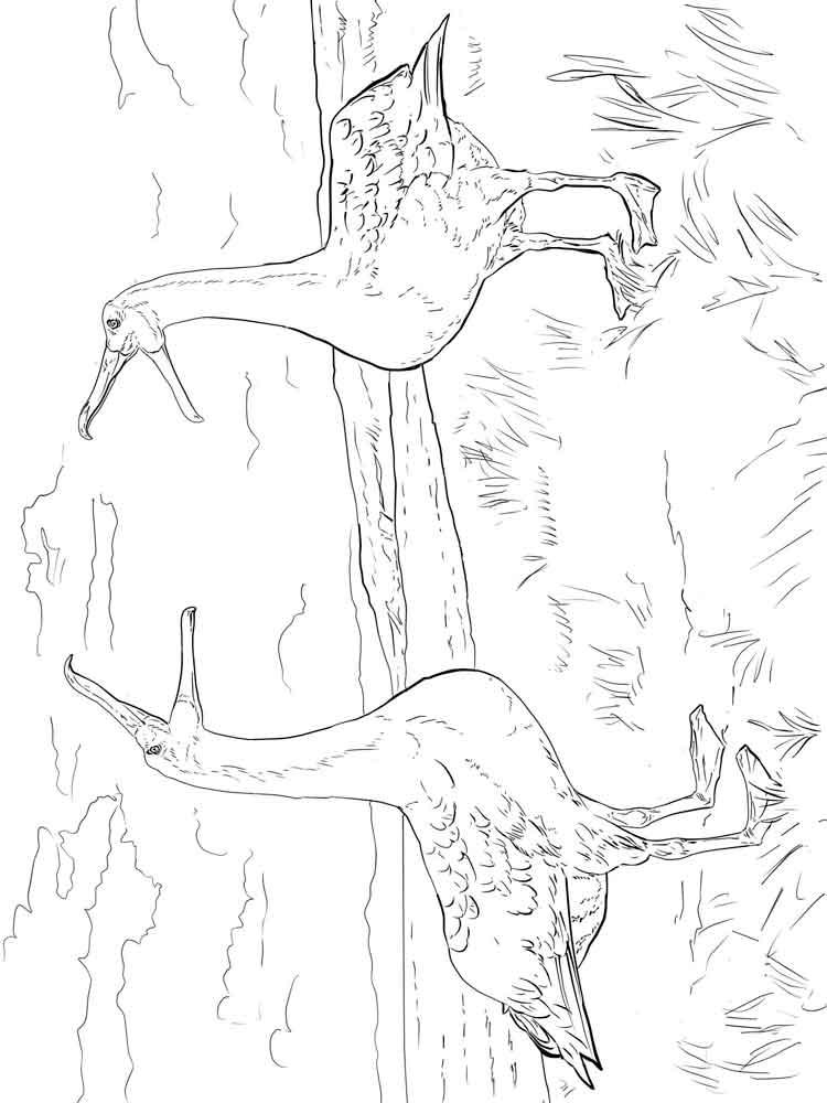 raskraski-albatros-9