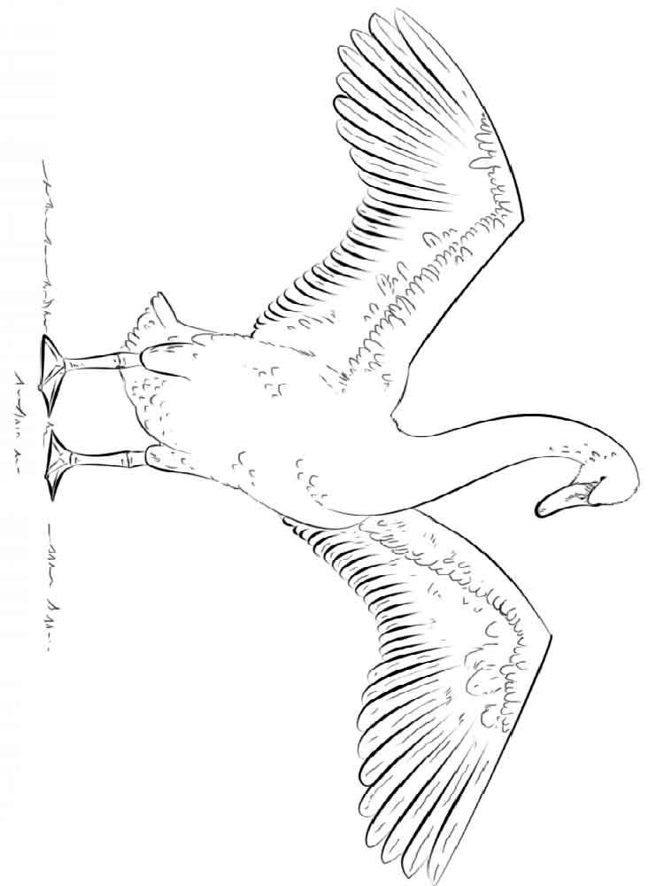 raskraski-lebed-9