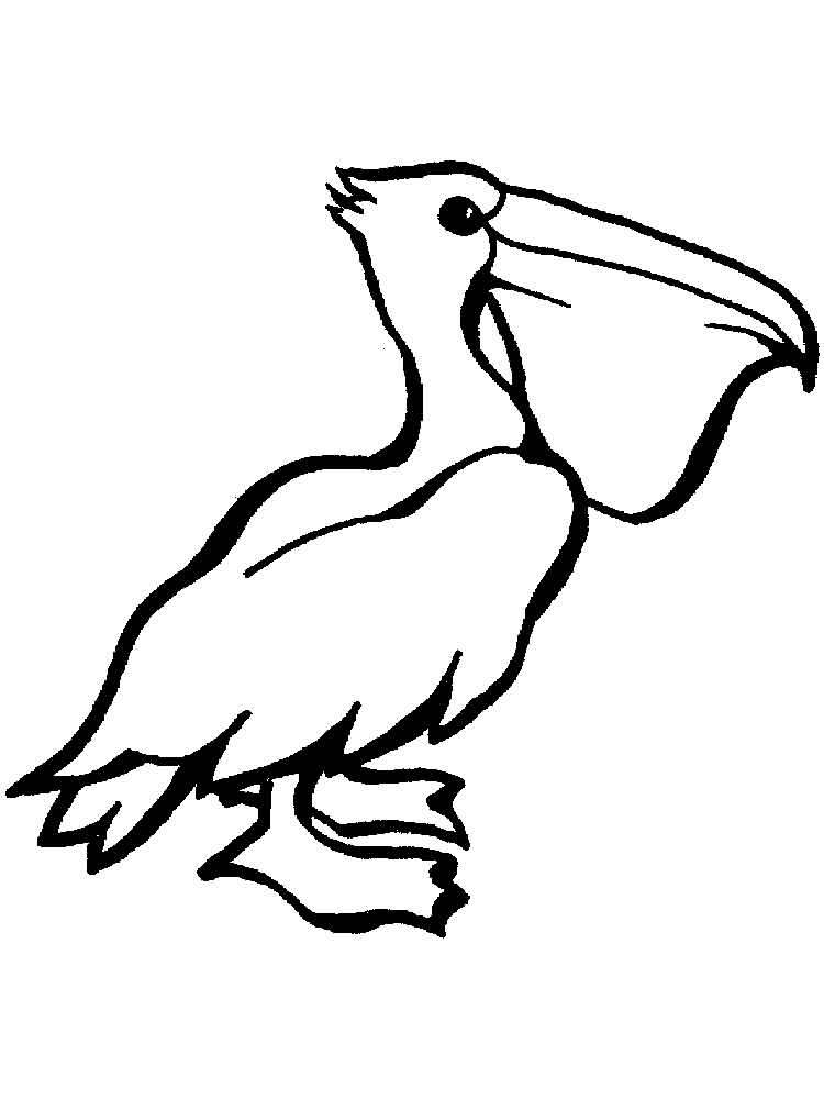 Утро, пеликан картинки для детей нарисованные