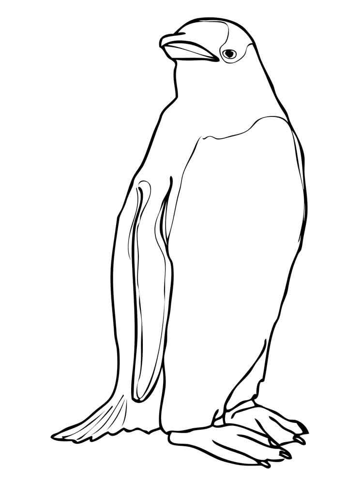 raskraski-pingvin-14