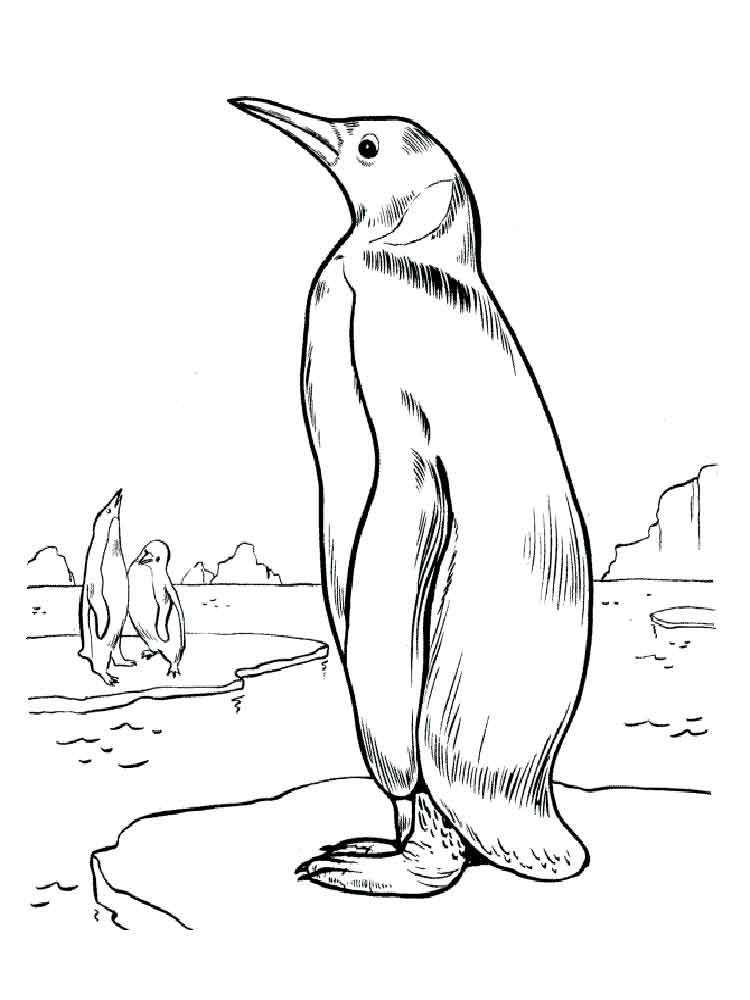 raskraski-pingvin-2