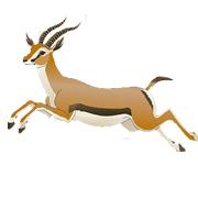 Раскраски Антилопа